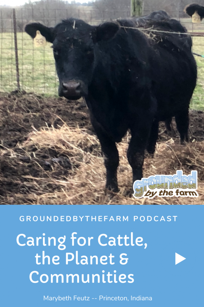 caring for beef cattle pin