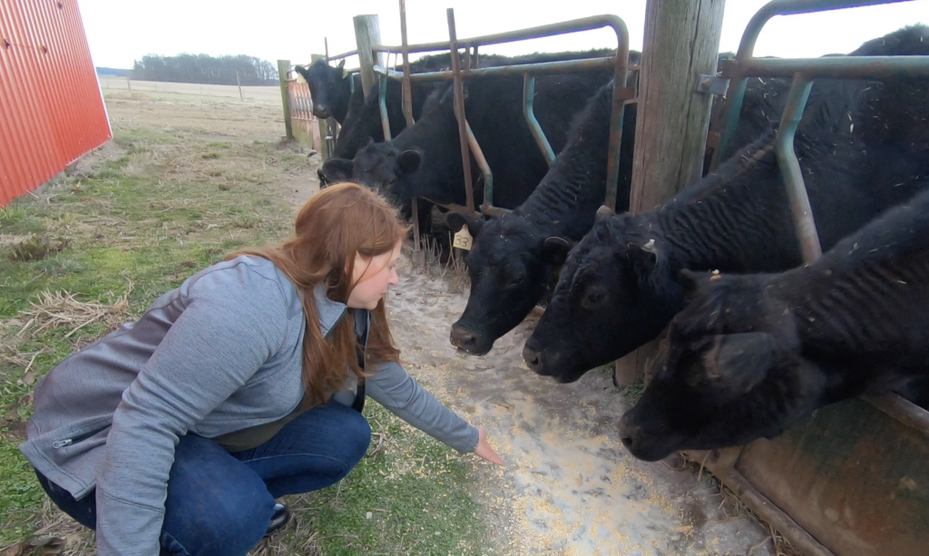 caring for beef cattle with marybeth feutz