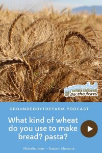 what kind of wheat