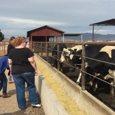 dairy farm tour