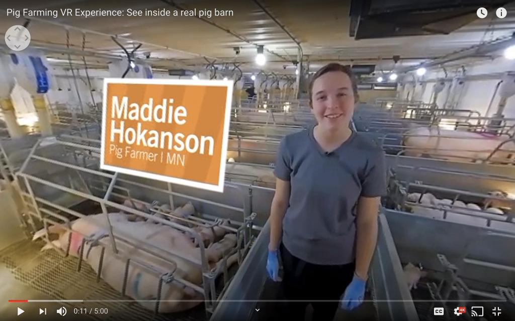 pig farm tour