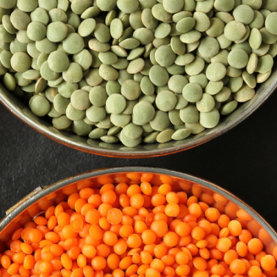 growing lentils cover photo