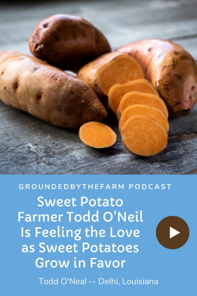 sweet potato farmer