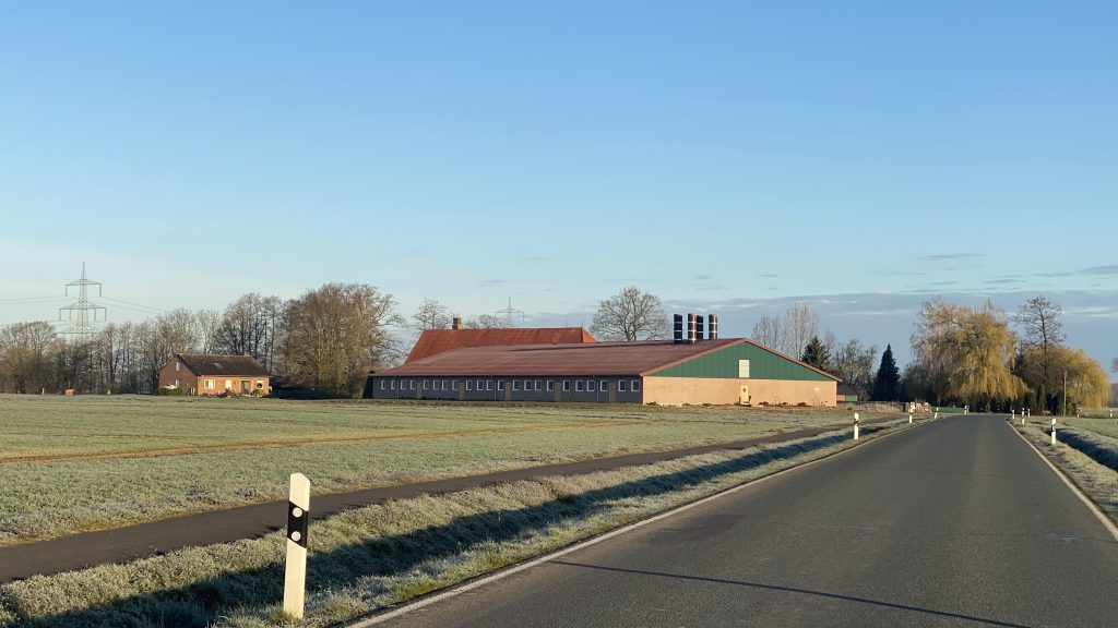 a pig farm in Europe