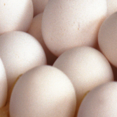 egg cover photo
