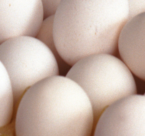 For Egg Farmers, Both Chickens and Eggs Have to Come First!