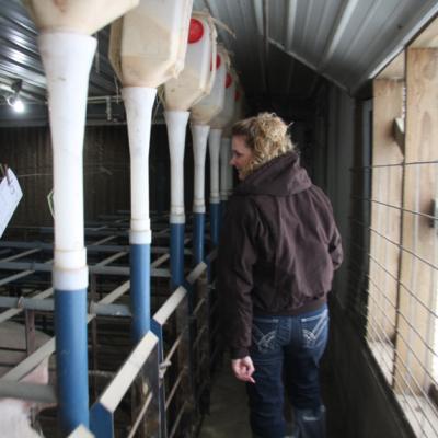 inside-hog-barns