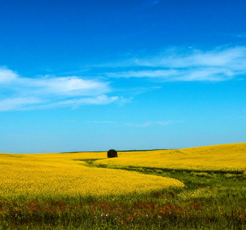 Canola and Canada Are Inextricably Connected, Farmer Lesley Rae Kelly Tells Us Why & More