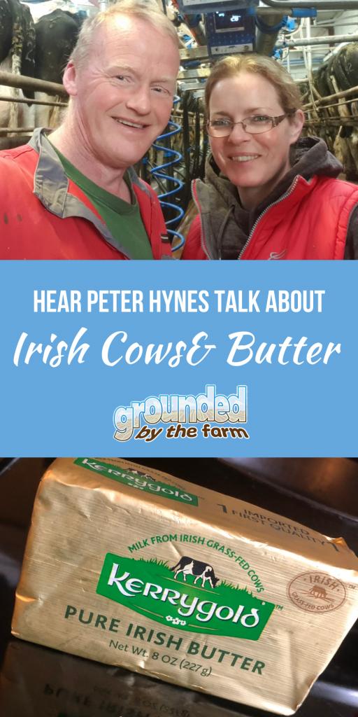 irish butter irish cows